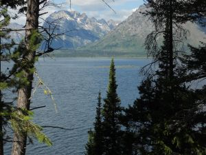 Island-lake-through-trees