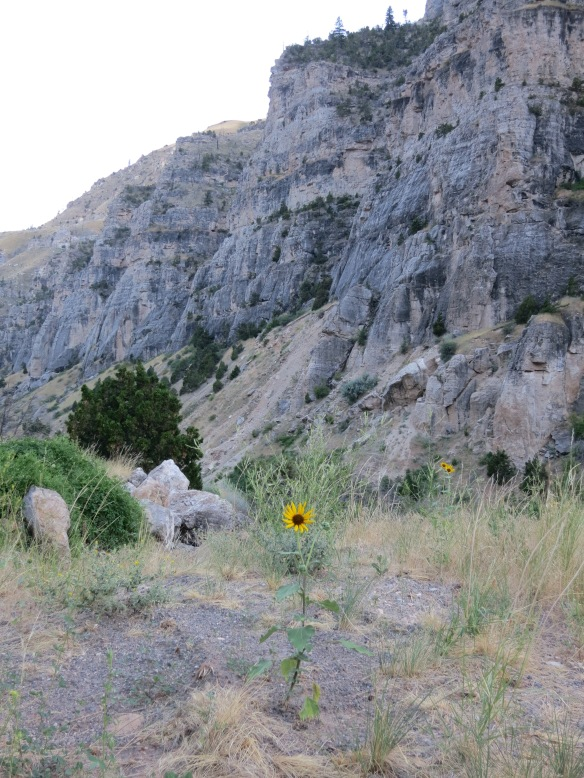 Thermopolis Wind River Canyon Flower